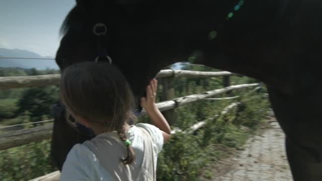 vídeos de stock, filmes e b-roll de woman and girl grooming horse outdoors - young animal