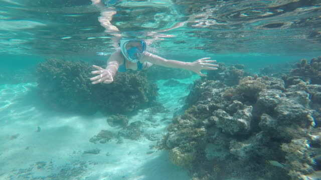woman and her son snorkeling under the sea with fish - huahine island stock videos and b-roll footage