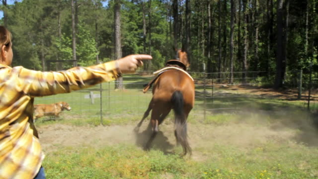 slo mo ms ts woman and horse in round pen / madison, florida, usa - animal markings stock videos & royalty-free footage