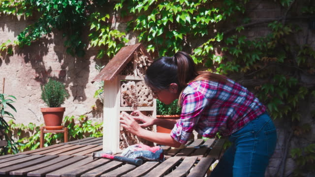woman and insect hotel. - birdhouse stock videos & royalty-free footage