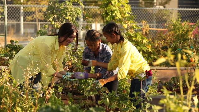 a woman and two young girls pulling potatoes out of an urban garden - gemeinschaftsgarten stock-videos und b-roll-filmmaterial