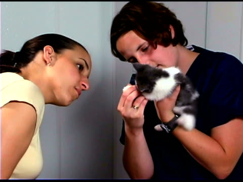 woman and veterinarian playing with kitten - only mid adult women stock videos & royalty-free footage