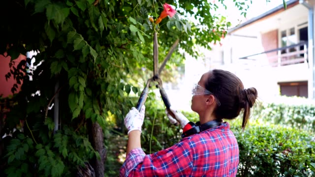 woman arranging hedge in the garden - secateurs stock videos & royalty-free footage