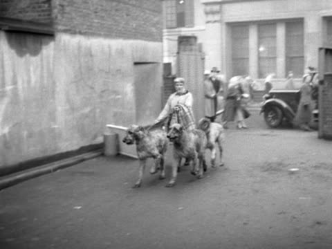 a woman arrives at the crufts dogs show with three large irish wolfhounds - crufts hundezuchtschau stock-videos und b-roll-filmmaterial