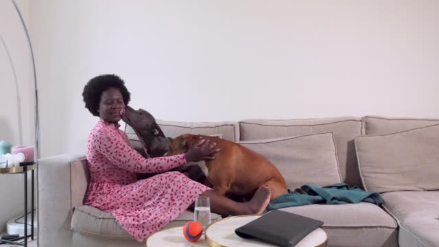 vídeos de stock, filmes e b-roll de woman at home on the couch with her dogs - rosa cor