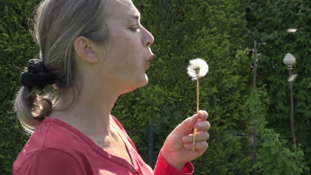 woman blowing dandelion blow-ball - haar nach hinten stock-videos und b-roll-filmmaterial