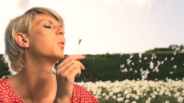 hd super slow mo: woman blowing dandelion seeds - back lit stock videos & royalty-free footage