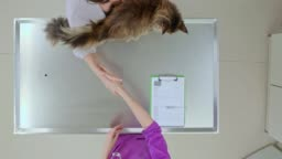 LD Woman bringing her cat to the vet and putting it on the examination table for the health check
