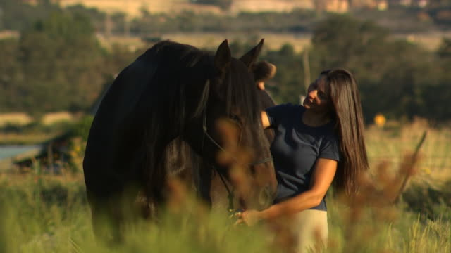 woman brushing a horse - altri spezzoni di questa ripresa 1139 video stock e b–roll
