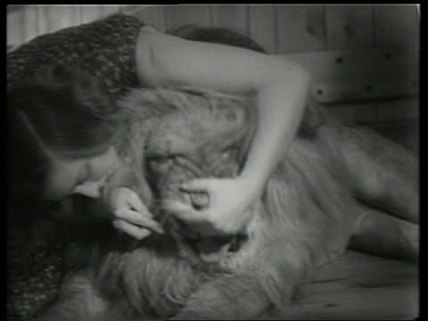 b/w woman brushing teeth of lion / sound - grooming stock videos & royalty-free footage
