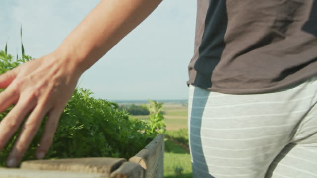 slo mo woman caressing fresh herbs in wooden boxes - basil stock videos & royalty-free footage