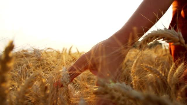 HD SUPER SLOW MO: Woman Caressing Wheat