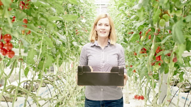 WS Woman carrying a box of tomatoes in a greenhouse