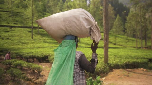 woman carrying a sack full of tea leaves. nuwara elyia, sri lanka - tè bevanda calda video stock e b–roll