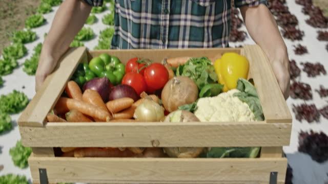 vídeos de stock, filmes e b-roll de mulher carregando uma caixa de madeira cheia de vegetais através de um campo - segurar