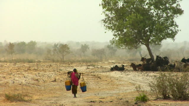 vidéos et rushes de ws, woman carrying water through arid landscape, niamey, niger - aride