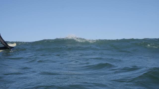 vídeos de stock, filmes e b-roll de mulher pegando uma onda numa prancha de surf - memorial