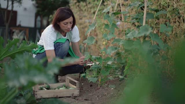 vidéos et rushes de woman checking smartphone while working in a vegetable garden - une seule femme d'âge moyen