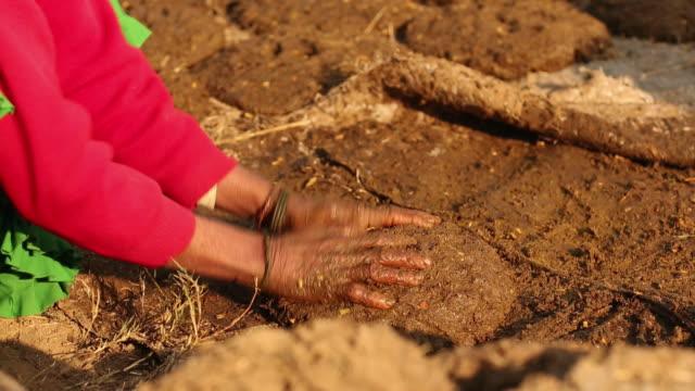 Woman collecting cow dung, Ballabhgarh, Haryana, India