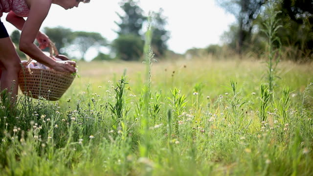 vídeos de stock, filmes e b-roll de woman collecting wildflowers and herbs growing in countryside - só mulheres maduras