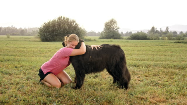 slo mo woman cuddling with her newfoundland dog in the meadow - pet owner stock videos & royalty-free footage