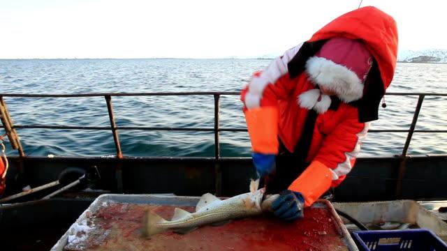 vídeos de stock e filmes b-roll de woman cut up the fish on the fishing boat - amanhar o peixe