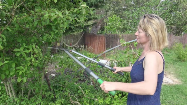 woman cuts off the branches by pruner. side view - pruning stock videos & royalty-free footage