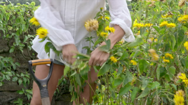 woman cutting flowers - secateurs stock videos & royalty-free footage