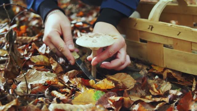 stockvideo's en b-roll-footage met woman cutting mushroom in a forest. - schimmel