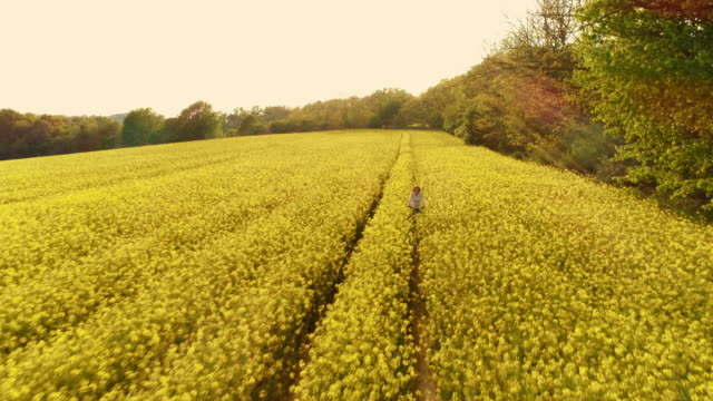 AERIAL Woman cycling along tire tracks in a canola field