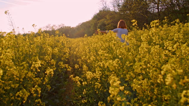 slo mo woman cycling in a canola field - oilseed rape stock videos & royalty-free footage
