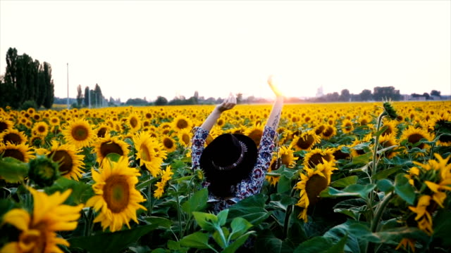 woman dancing in the sunflower field - sunflower stock videos and b-roll footage