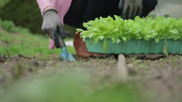 Woman digging garden