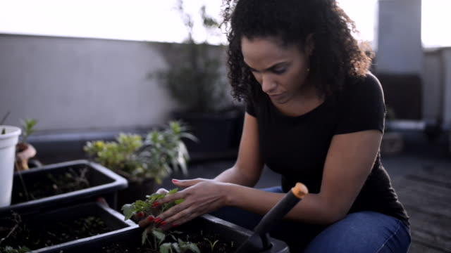 woman doing urban gardening. - gardening stock videos & royalty-free footage