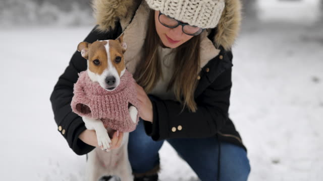 woman dressing up her cute jack russell terrier during snowy winter day in nature - jumper stock videos & royalty-free footage