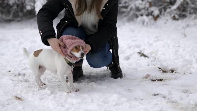 vídeos y material grabado en eventos de stock de mujer vistiendo su lindo jack russell terrier durante el día de invierno en la naturaleza - abrigo