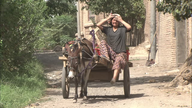 a woman drives a donkeypulled cart carrying grapes silk road china - esel stock-videos und b-roll-filmmaterial