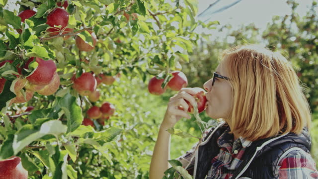 ds woman eating an apple after picking it from a tree - picking harvesting stock videos & royalty-free footage