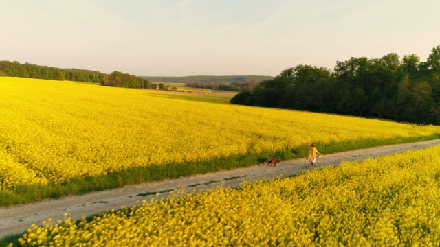 aerial woman enjoying the summer breeze as she cycling with her dog - field stock videos & royalty-free footage