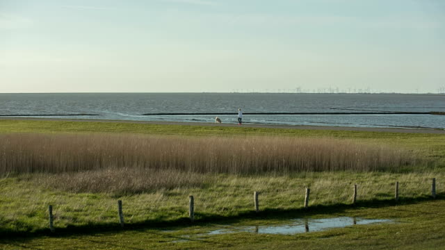 a woman enjoys the walk along the wadden sea with her pedigree dog. - mud flat stock videos and b-roll footage