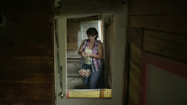 a woman enters a chicken coop - chicken coop stock videos & royalty-free footage