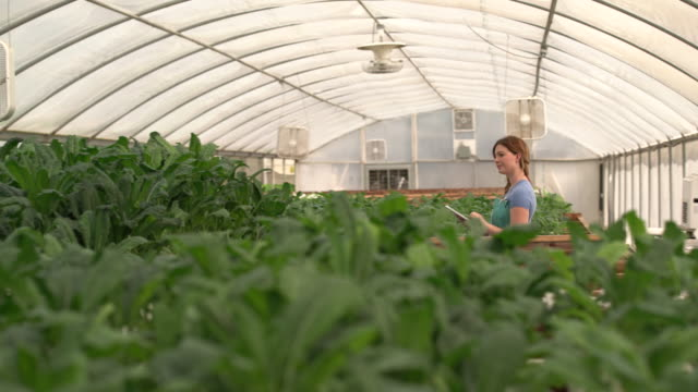 ws woman examining kale in a hydroponic farm - farm to table stock videos & royalty-free footage