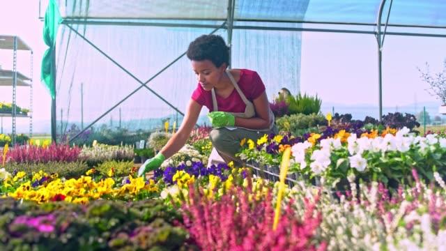 woman examining plants in greenhouse - centro per il giardinaggio video stock e b–roll