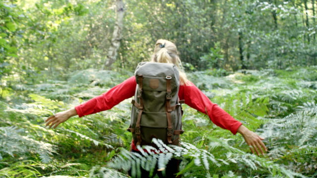 woman exploring glade with ferns in the woods - portare video stock e b–roll