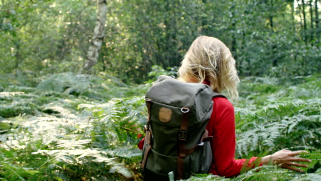 woman exploring glade with ferns in the woods - zaino da montagna video stock e b–roll