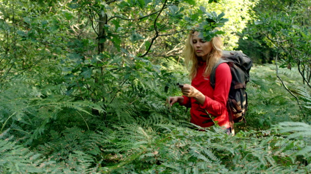 woman exploring glade with ferns. using compass - wilderness area stock videos & royalty-free footage