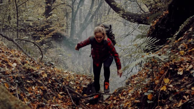 woman exploring wilderness area. autumnal forest - esplorazione video stock e b–roll