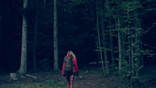 woman exploring wilderness area - wilderness area stock videos & royalty-free footage
