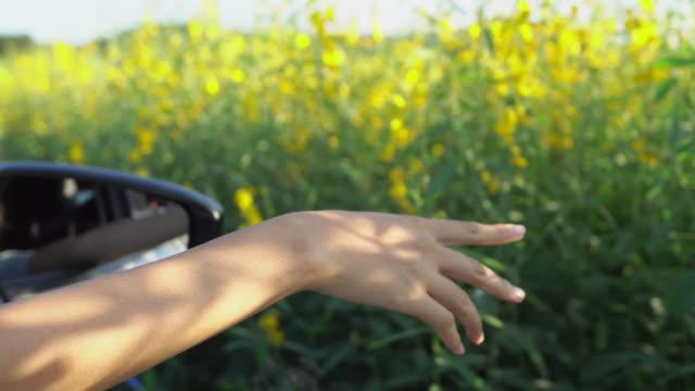 vídeos de stock, filmes e b-roll de mulher estende braço para fora da janela do carro - idílico