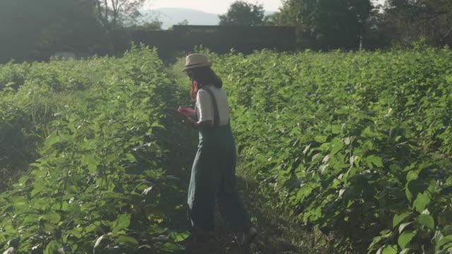 vídeos y material grabado en eventos de stock de mujer agricultora cheques - tierra cultivada